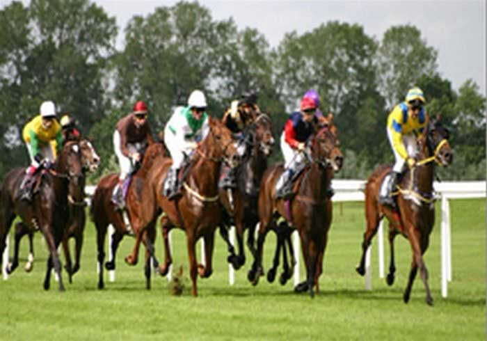 Image of Racehorses