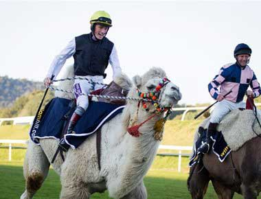 Camel Racing at a racecourse