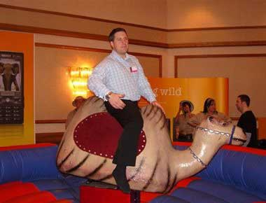 Hire Rodeo Camel Ride