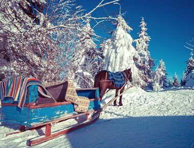 Pony and Sleigh Hire